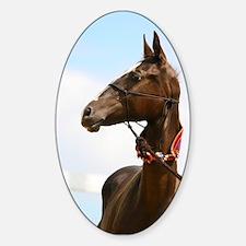 Akhal-Teke Horse Oval Decal