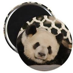 Giant Panda 2.25