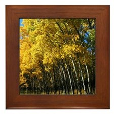 Colorado Aspen Framed Tile