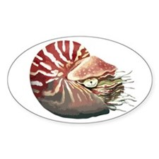 Chambered Nautilus Oval Decal