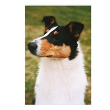 Postcards (Package of 8) Smooth Collie