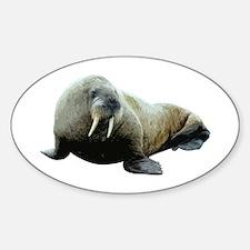 Walrus Oval Decal