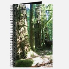 Cathedral Grove Journal