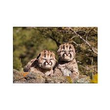 Cougar Kitten Rectangle Magnet