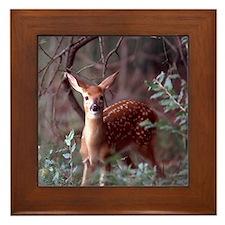 Whitetail Deer Framed Tile