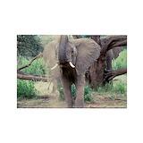Elephant Single