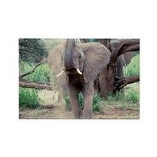 Elephant Rectangle Magnet
