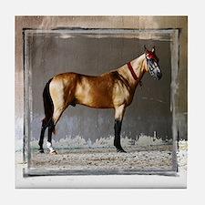 Akhal-Teke Horse Tile Coaster