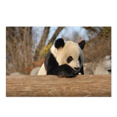 Giant Panda Postcards (Package of 8)