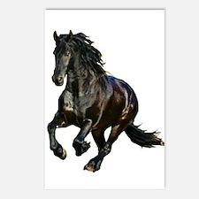 Black Stallion Horse Postcards (Package of 8)