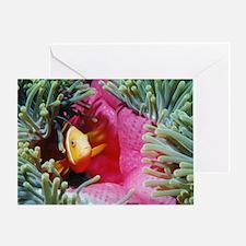 Maldives Clownfish Greeting Card