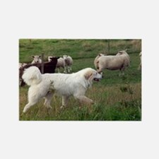 Great Pyrenees Rectangle Magnet, On Duty