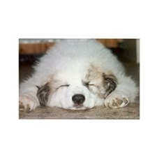 Great Pyrenees Rectangle Magnet, Sleeping Puppy