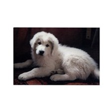Great Pyrenees Rectangle Magnet, Puppy posing