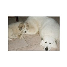 Great Pyrenees Rectangle Magnet, Big Brother
