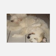 Great Pyrenees Rectangle Magnet, Sleeping Pose