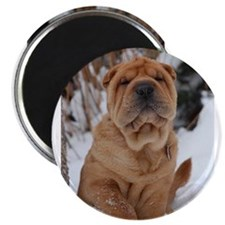 Chinese Shar Pei #1 Magnets