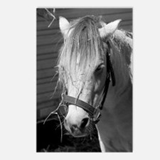 Bad Hair Day Pony Postcards (Package of 8)