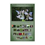 Janet Schroeder Mini Poster Print