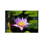 Nymphaea Rectangle Magnet