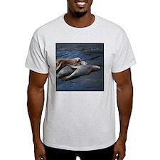 Sea lions sleeping T-Shirt