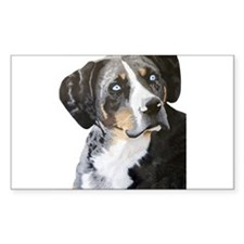 Catahoula Blue Eyes Rectangle Decal