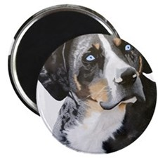 Catahoula Blue Eyes Magnet