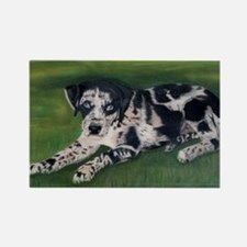 Catahoula Puppy Rectangle Magnet (100 pack)