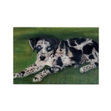 Catahoula Puppy Rectangle Magnet