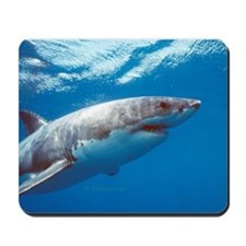 Great white shark portrait Mousepad