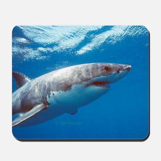 Great white shark portrait Mousepad