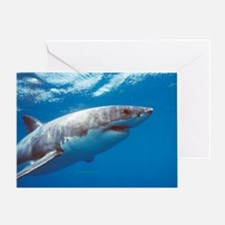 Great white shark portrait Greeting Card