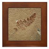 Fossils Framed Tiles