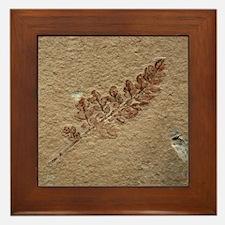 Brown Fern Fossil Framed Art Tile