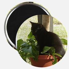"Black Cat in Plant 2.25"" Magnet (10 pack)"