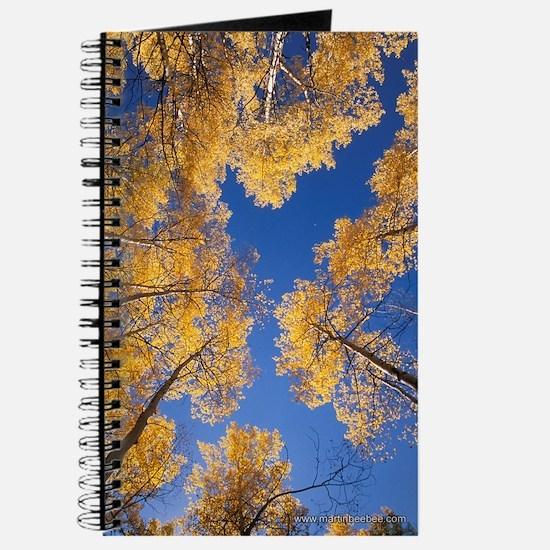 Personal Journal & Sketchbook: Autumn Aspens