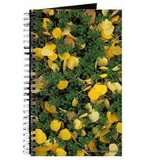 Personal Journal & Sketchbook: Aspen Leaves