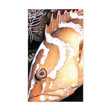 Nassau Grouper Rectangle Decal