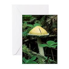 Mushroom Greeting Cards (Pk of 10)
