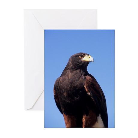Greeting Cards: Harris's Hawk (Pk of 10)