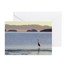 Greeting Cards: Great Blue Heron (Pk of 10)