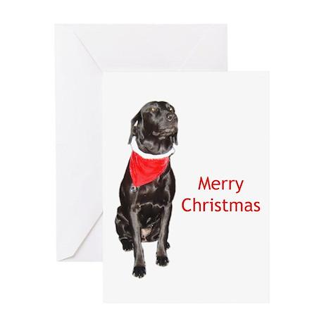 merry Christmas lab Greeting Card