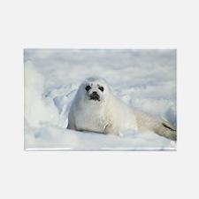 Harp Seal Rectangle Magnet