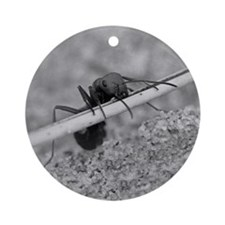 Up And Over Ant Keepsake (Round)