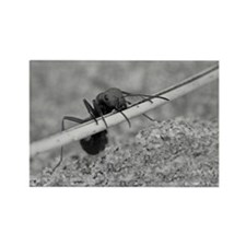 Up And Over Ant Rectangle Magnet