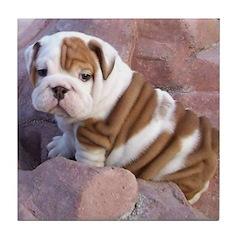 Bulldog Puppy Tile Coaster