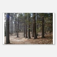 Color Nature Photo Art Rectangle Decal