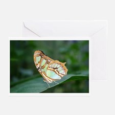 Color Butterfly Photo Art Greeting Cards (Package
