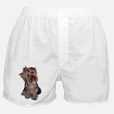 yorkie portrait Boxer Shorts