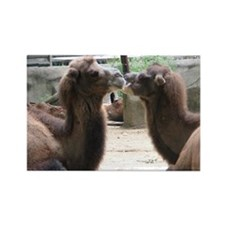 Kissing Camels Rectangle Magnet
